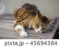猫とベンチ 45694384