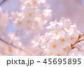 桜 花 クローズアップの写真 45695895