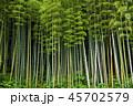 竹 竹林 初夏の写真 45702579