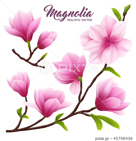 Realistic Magnolia Flower Icon Set 45706436