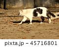 野良猫 45716801