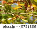 紅葉とジョロウグモ 45721866