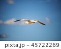 飛翔 飛ぶ 飛行の写真 45722269
