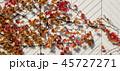 蔦の紅葉 45727271