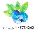 ブルーベリー 水彩タッチ 45734292