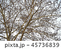Defoliated tree branches as a background. 45736839