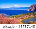 河津桜 富士山 海の写真 45737145