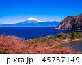 河津桜 富士山 海の写真 45737149