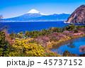 河津桜 富士山 海の写真 45737152
