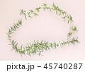 フレッシュなローズマリーの葉と花、フレーム素材、室内、白背景、背景素材 45740287