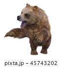 熊 グリズリー 動物のイラスト 45743202