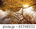 紅葉 木 樹木の写真 45746532