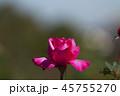 バラ 花 植物の写真 45755270