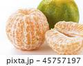 オレンジ 柑橘 柑橘系の写真 45757197
