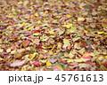 秋の色 45761613