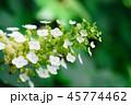 花 咲く 植物の写真 45774462