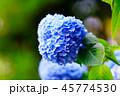 花 咲く 植物の写真 45774530