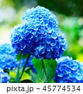 花 咲く 植物の写真 45774534