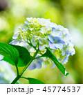 花 咲く 植物の写真 45774537
