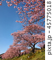 みなみの桜と菜の花まつり 45775018