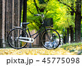 秋 自転車 森林の写真 45775098
