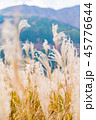 仙石原 秋 植物の写真 45776644