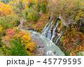 森林 林 森の写真 45779595