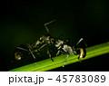 あり アリ 蟻の写真 45783089