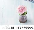 菊科 キク 菊の写真 45785599