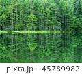 御射鹿池 新緑 池の写真 45789982