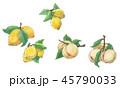 果物 レモン 檸檬のイラスト 45790033