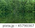 御射鹿池 新緑 池の写真 45790367