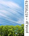 青空 晴れ 晴天の写真 45795879