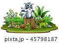 動物 あらいぐま アライグマのイラスト 45798187