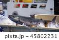 鮭の水揚げ 45802231