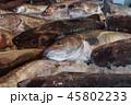 タラ(鱈)の水揚げ、魚市場 45802233