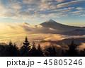 森林 林 森の写真 45805246