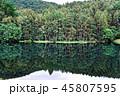 日本 葉 植物の写真 45807595