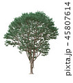 Tree isolated on white with clipping path. 45807614