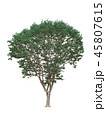 Tree isolated on white with clipping path. 45807615