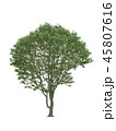 Tree isolated on white with clipping path. 45807616