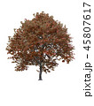 Tree isolated on white with clipping path. 45807617