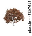 Tree isolated on white with clipping path. 45807618