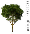 Tree isolated on white with clipping path. 45807955