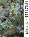お花 フラワー 咲く花の写真 45817384