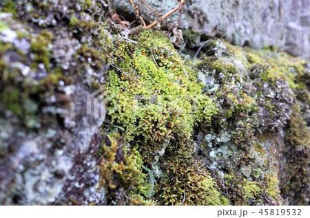 苔の生えた岩、自然の美しさ、山と田舎の風景、群馬県南牧村 45819532