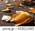 落ち葉を照らす朝日 45821495