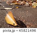 落ち葉を掃除しょう 45821496