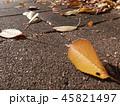 落ち葉は掃除対象 45821497