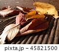 落ち葉・枯れ葉・色取り取り 45821500